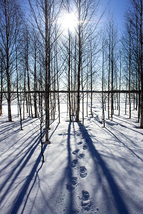 Laponie - 01