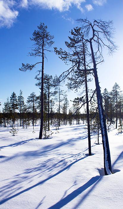 Laponie - 14