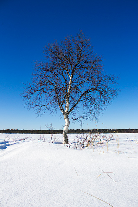 Laponie - 11