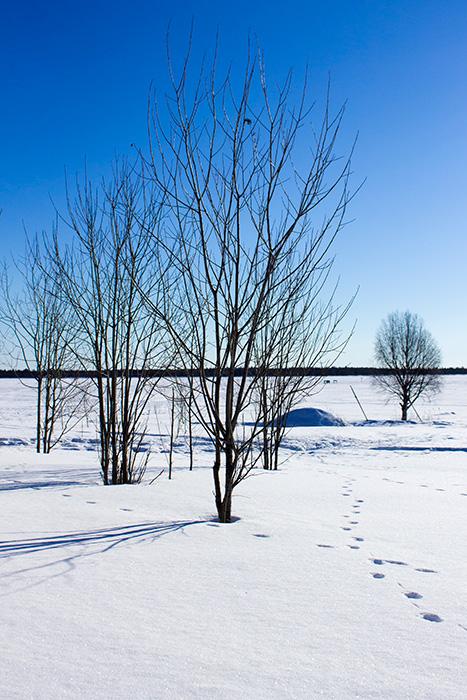 Laponie - 24