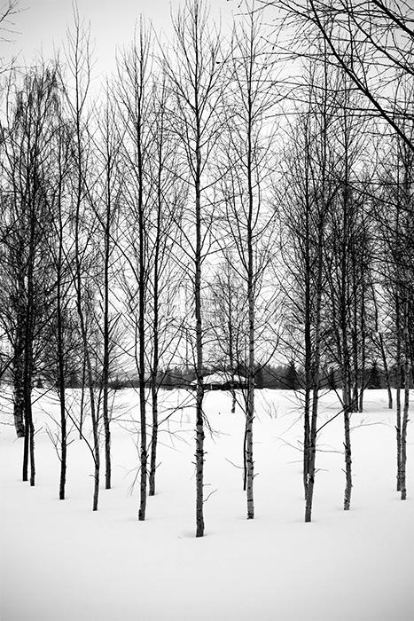 Laponie - 25